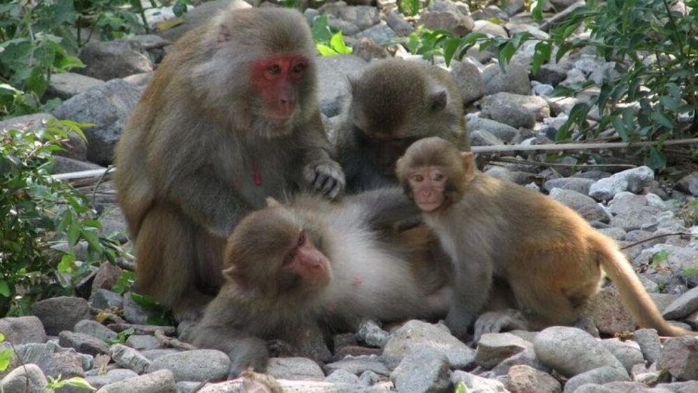 Destino Vietnamese Monkey Island