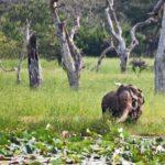 10 Parques Nacionales más hermosos de Sri Lanka