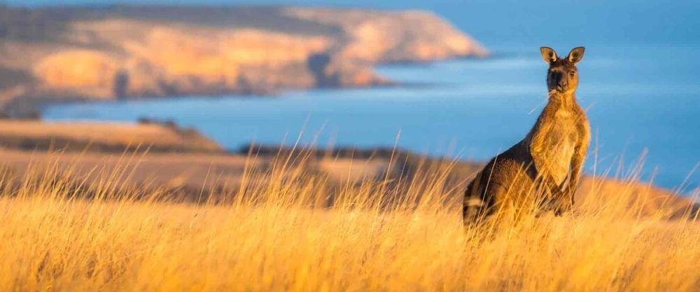 Destino kangaroo Island Australia