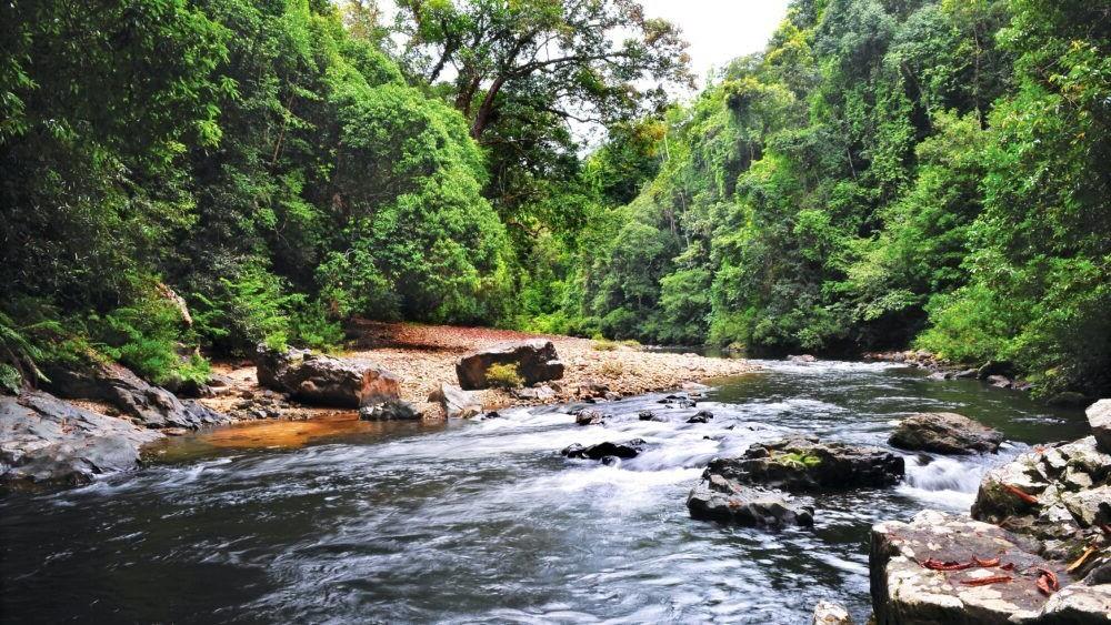El lugar turístico de Taman Negara