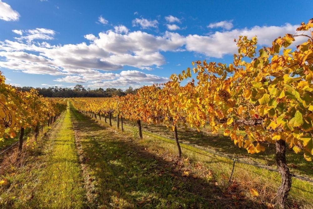 Excursión por Swan Valley Vineyards