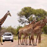 10 atracciones turísticas más importantes de Sudáfrica