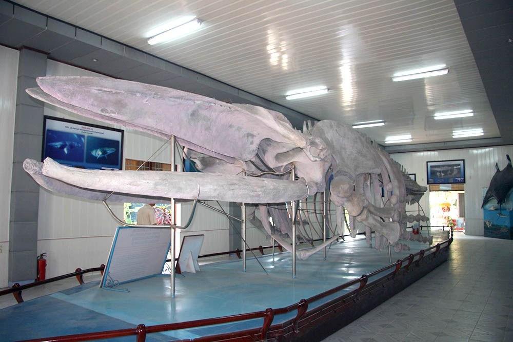 Que hacer en National Oceanographic Museum