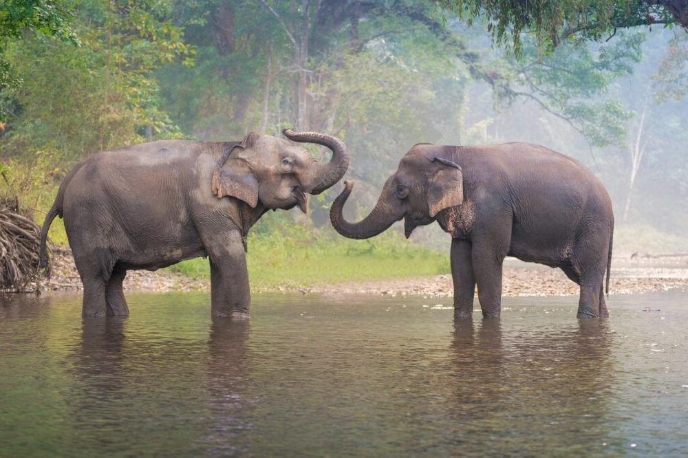 Que hacer en el Campamento de elefantes de Thom's Pai Tailandia