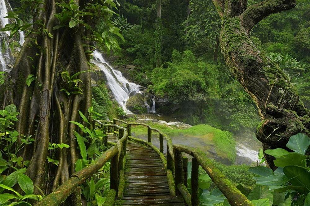 Que hacer en los Bosques Naturales Tailandia