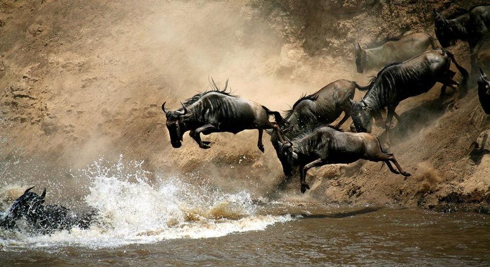 Tour por Masai Mara National Reserve