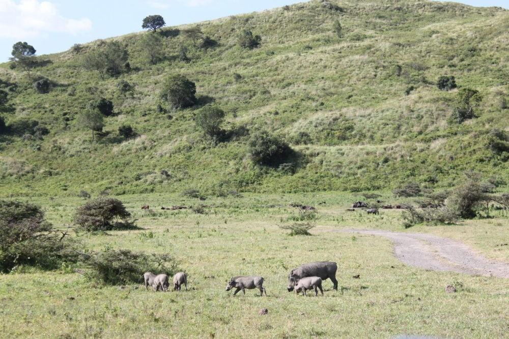 Tour por el Parque Nacional de Arusha