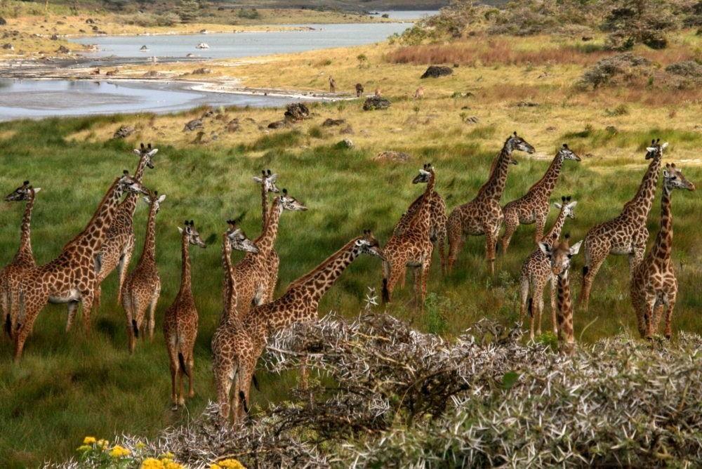 Turismo en el Parque Nacional Mikumi