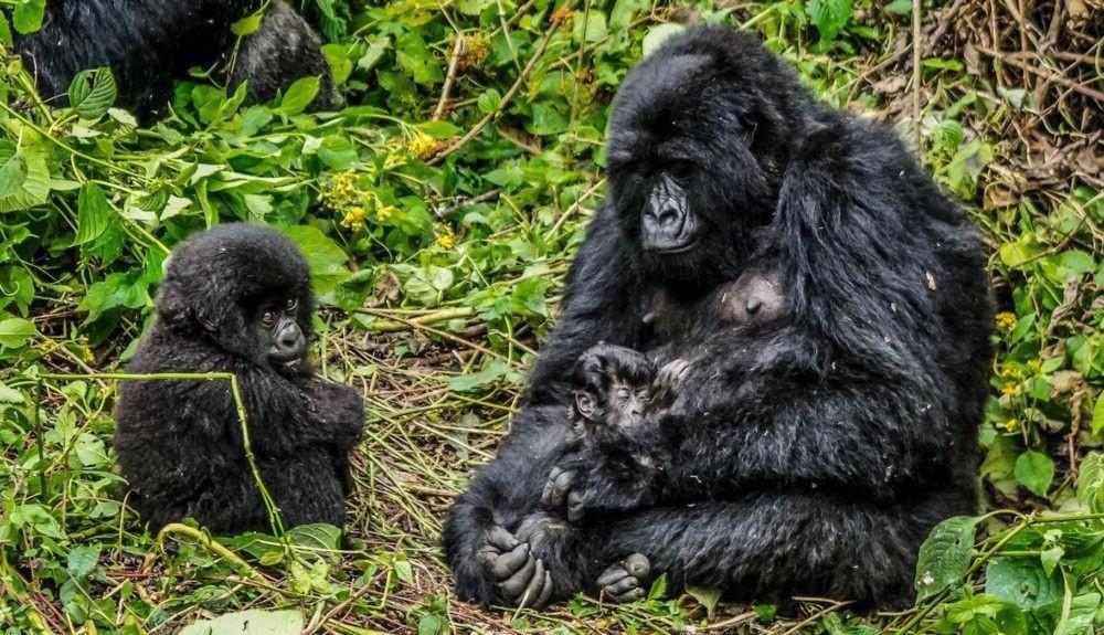 Turismo por el Parque Nacional Virunga