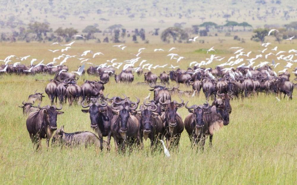 Turismo por el Parque Nacional del Serengeti