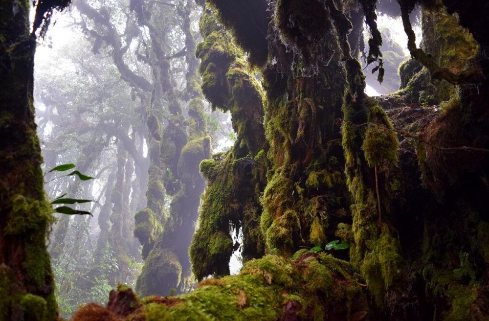 Un lugar Sagrado, Bosque musgoso Cameron