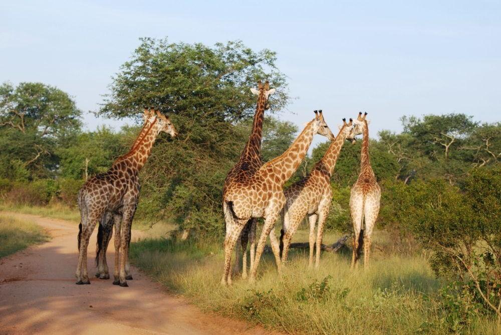 Viaje por el Parque Nacional Kruger