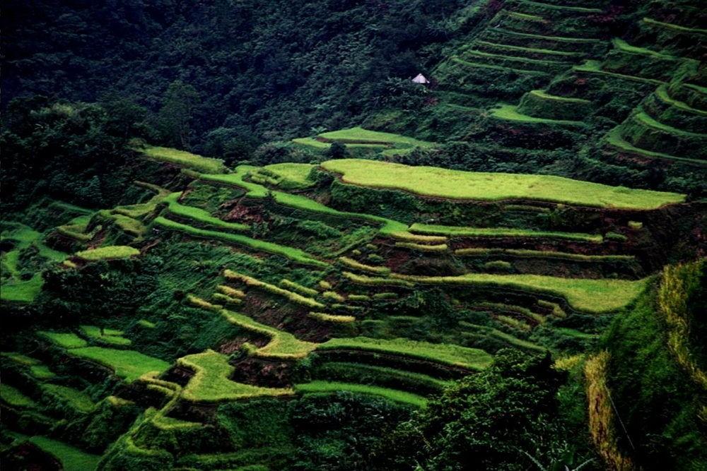 Vista amplia del Arroz en terrazas Ifugao
