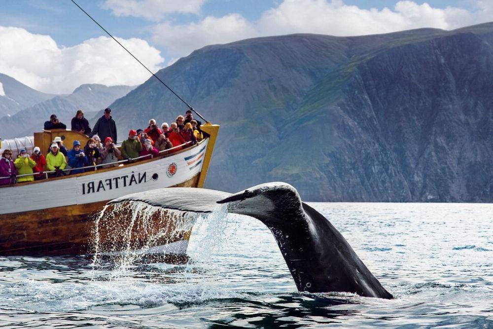 Destino Husavik Whale Watching