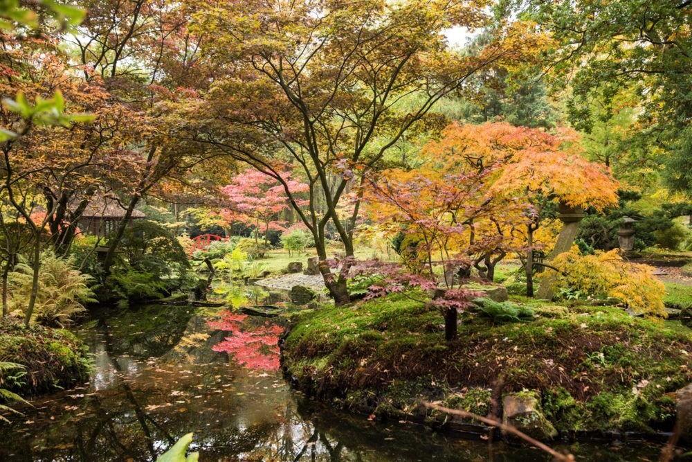 Destino Japanese Garden in Clingendael
