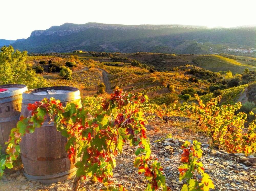 Destino Rioja Wine Region España