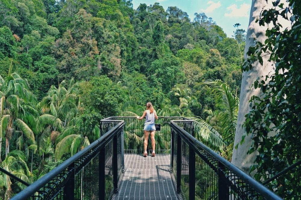 Destino Tamborine Rainforest Skywalk