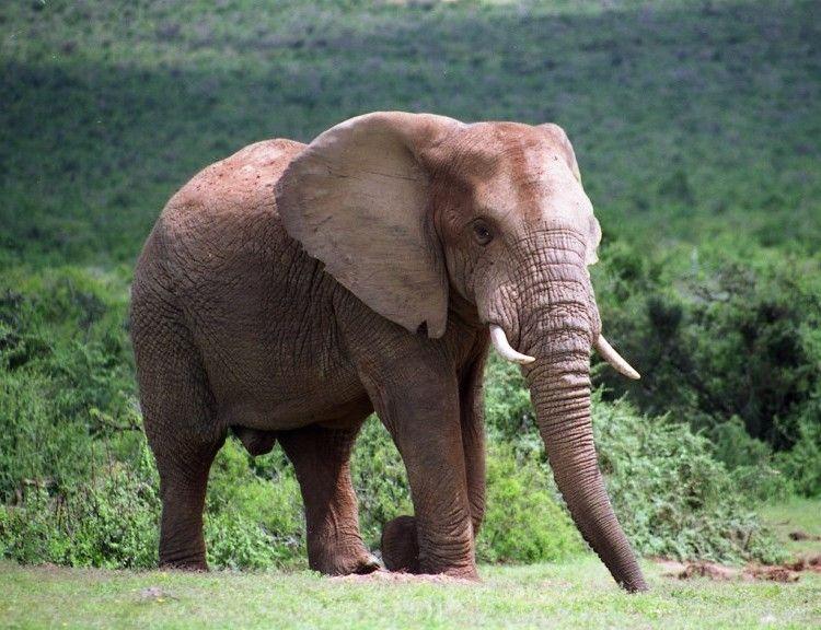 Addo Elephant Parque Nacional