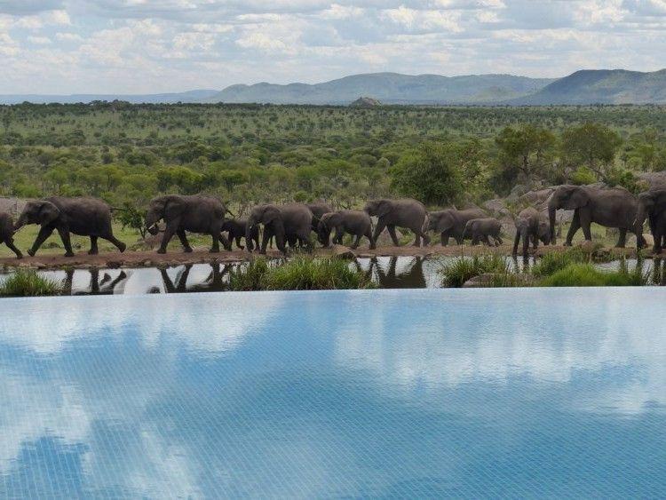 Cuatro Estaciones De Safari Lodge Piscina