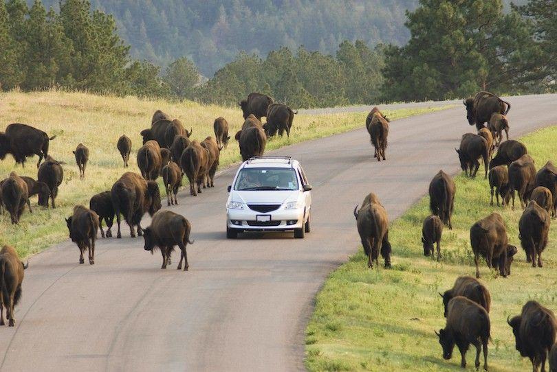 Custer Parque Sd Estado