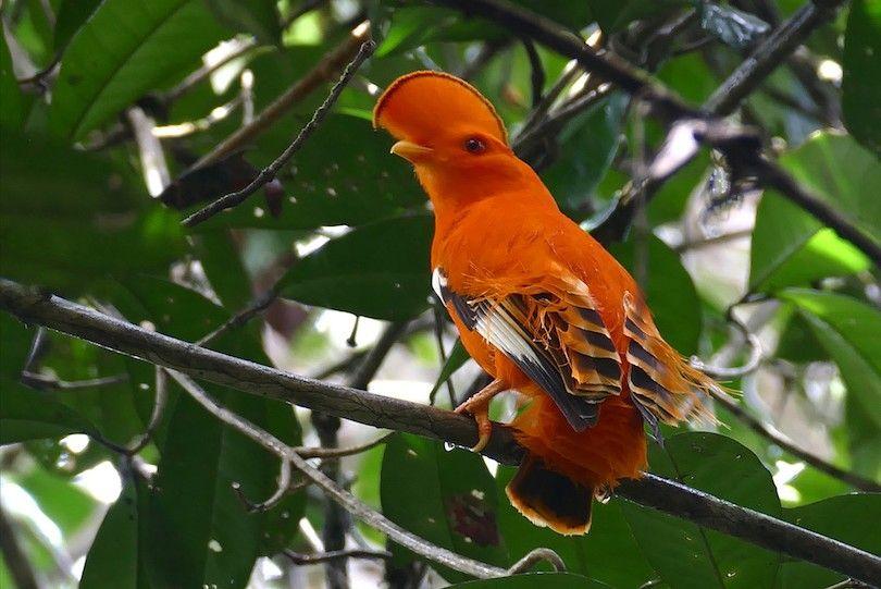 Guayana Parque Nacional Amazónico