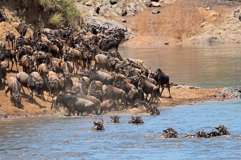 Masai Mara Reserva Nacional
