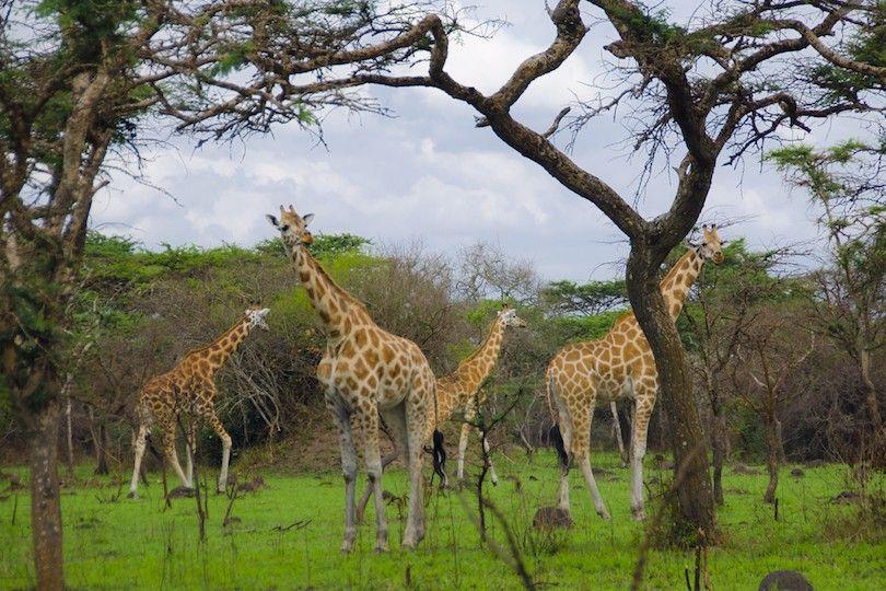 Parque Nacional Del Lago Mburo