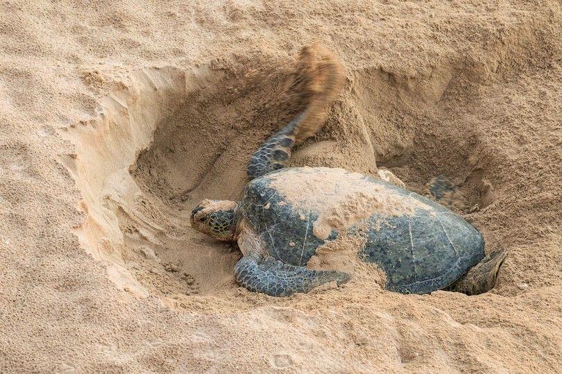 Ras Al Jinz Reserva De Tortugas