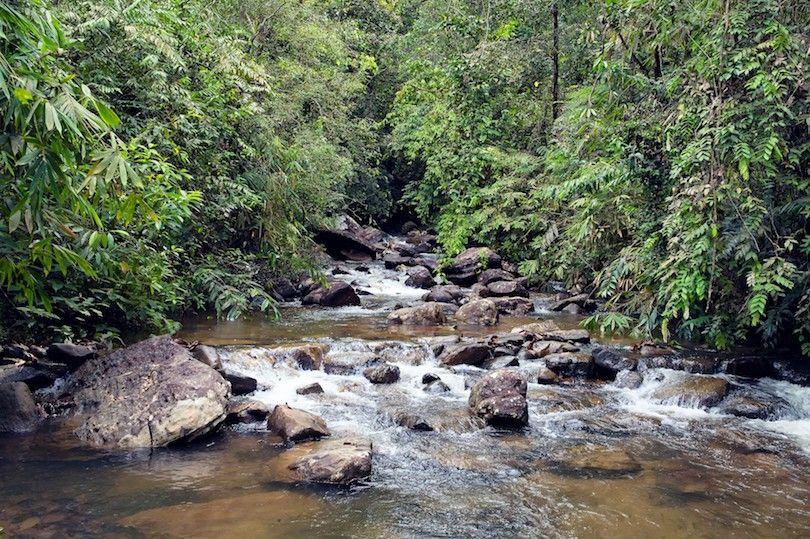 Reserva Forestal De Sinharaja