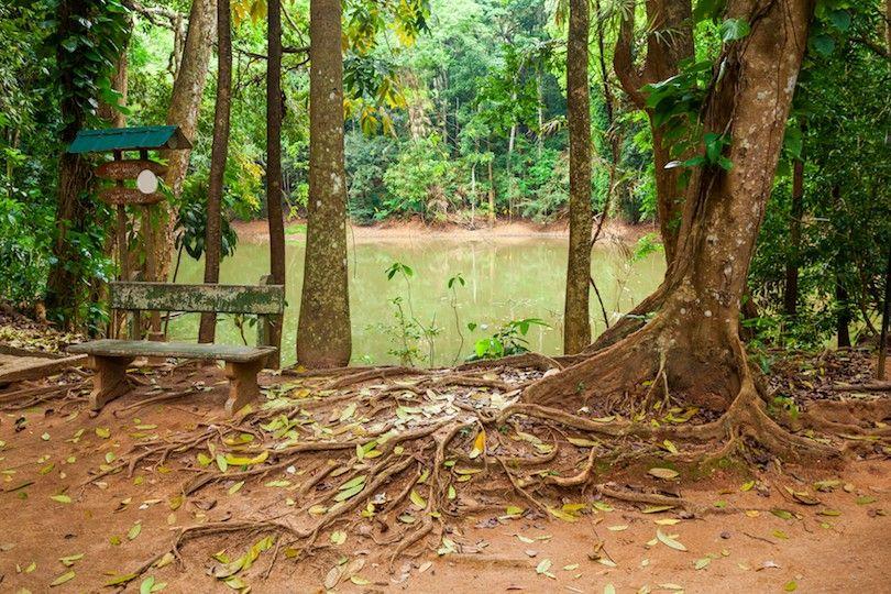 Reserva Forestal Udawattakele