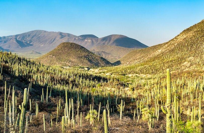 tehuacan cuicatlan biosphere reserve