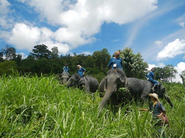 Viaje De La Familia Tailandia