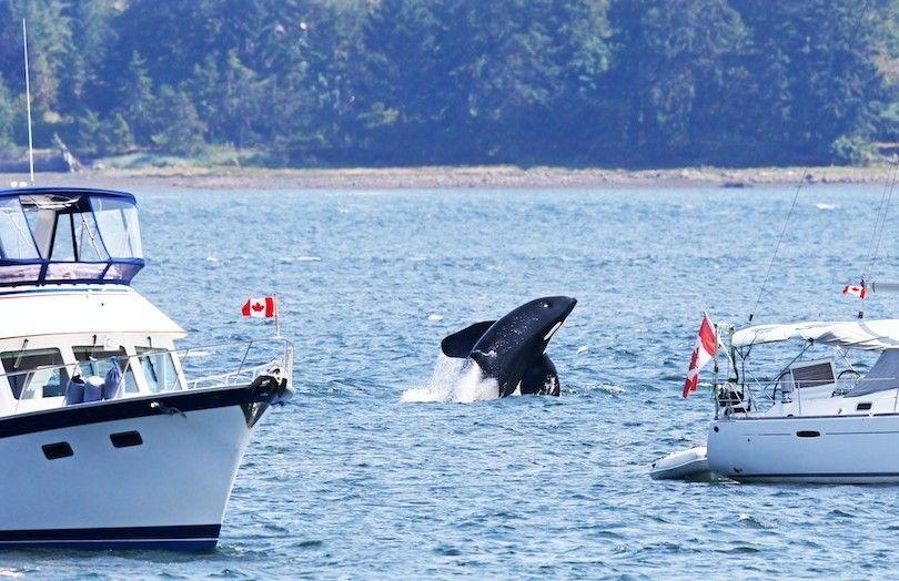 Victoria De Observación De Ballenas