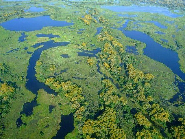 waters of the pantanal