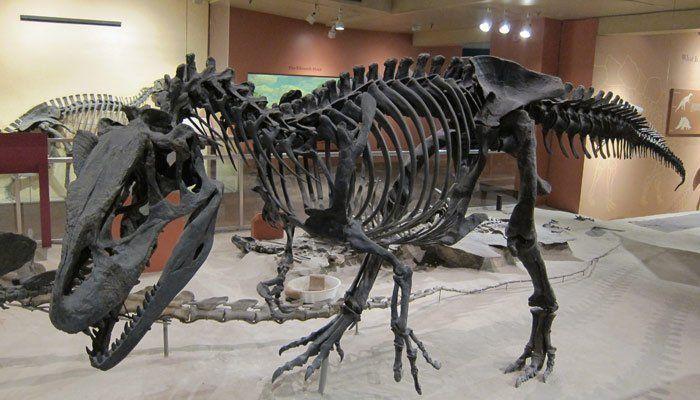 Museo Nacional de Historia Natural del Smithsonian, Washington 2