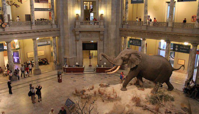 Museo Nacional de Historia Natural del Smithsonian, Washington 3