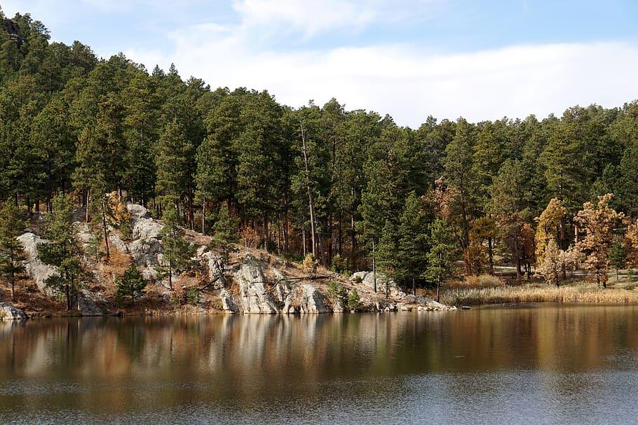 Bosque Nacional de las Colinas Negras