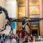 Lo más destacado del Museo de Historia Natural de Nueva York