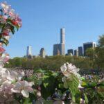 Cosas que hacer en primavera en Nueva York